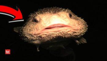 5 Makhluk Hidup Misterius di Lautan