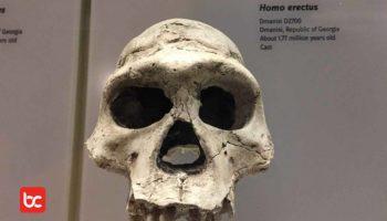 Dari Mana Manusia Pertama Berasal?