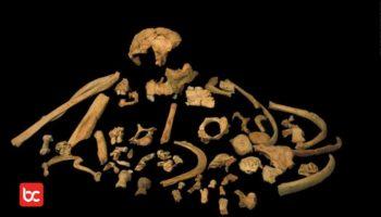 Apa Perbedaan Pithecanthropus dengan Homo?