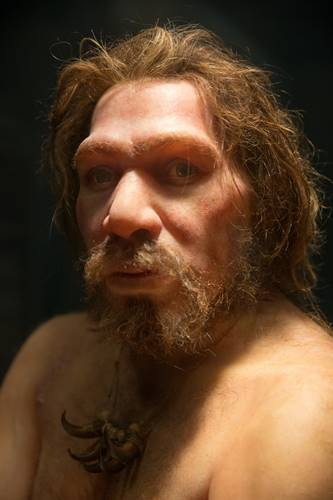 Potret replika Homo neanderthalensis Fakta Neanderthal Punah Gara-Gara Sapiens