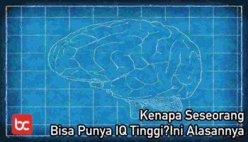 Kenapa Seseorang Bisa Punya IQ Tinggi? Ini Alasannya