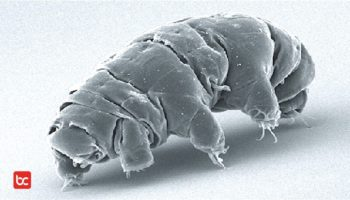 Tardigrade, Hewan Paling Tangguh yang Dapat Bertahan Hidup di Ruang Angkasa