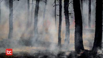 Benarkah Krisis Iklim Parah Setelah COVID-19?