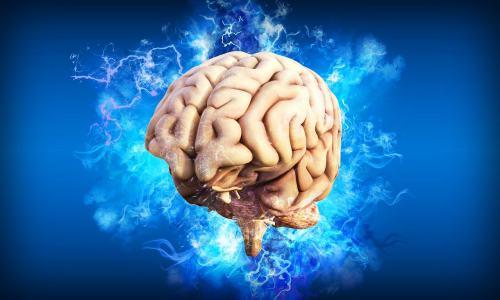 Hubungan ukuran otak