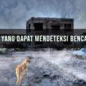 8 Hewan yang Dapat Mendeteksi Bencana Alam