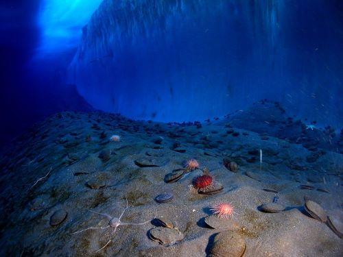 Lapisan Es di Laut Antartika