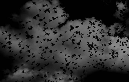polusi cahaya berpengaruh pada burung-burung imigran