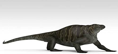 Cotylorhynchus hewan purba mirip kadal berperut besar