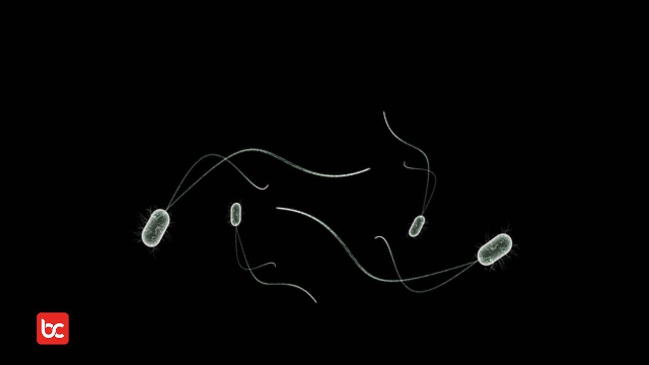 ilustrasi gambar mikoorganisme dan organisme tertentu