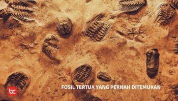 5 Fosil Tertua yang Pernah Ditemukan