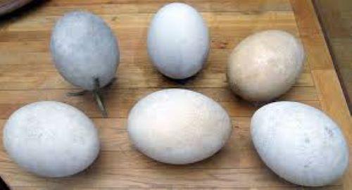 Telur Dinosaurus - Fakta Aneh