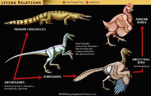 Dinosours Family Tree - Fakta Aneh