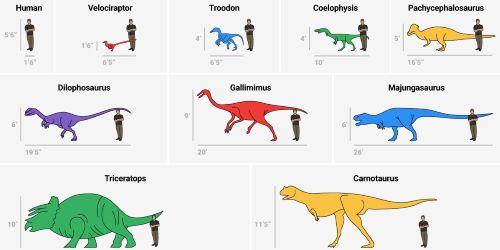 Dinosours Size Comparison Chart
