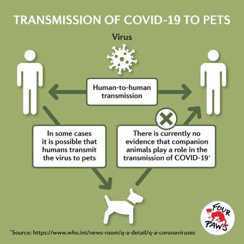 Penularan Virus Dari Manusia-Hewan