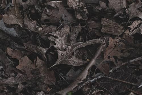 ilustrasi gambar daun yang kering