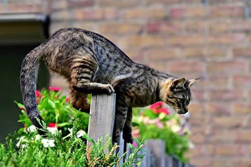 kucing memiliki ekor yang berfungsi untuk berkomunikasi dan keseimbangan