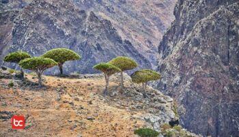 Anehnya Pulau Socotra, Serasa Berada di Planet Alien!