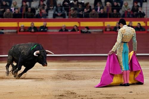 ternyata banteng bukan marah karena warna Merah kain Matador ya