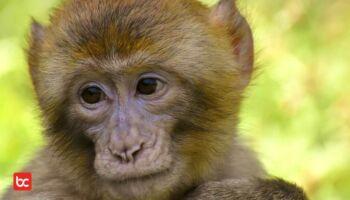 Harus Tahu! 6 Hewan Menawan yang Hidup di Afrika