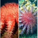 10 Hewan laut yang Nggak Punya Otak!