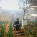 Apakah Tanaman Di Mars Bisa Di Makan?