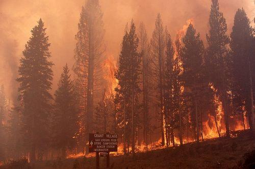 Taman Nasional Yellowstone, AS - Kebakaran Terbesar