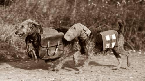 Anjing anjing dalam perang dunia II
