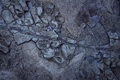 pola jejak kaki pada batuan bertekstur kasar