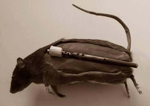 Tikus juga menjadi senjata dalam perang dunia II