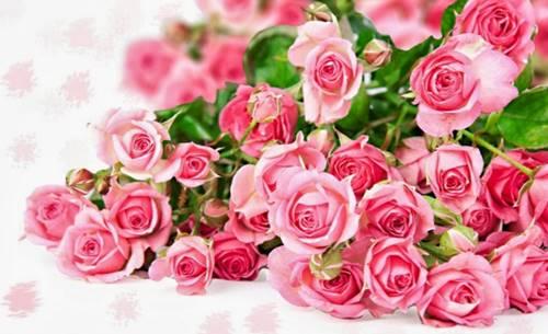 Tumbuhan bunga mawar Indah di jerman sejak 815 masehi