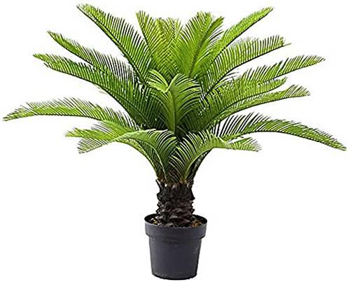 tanaman hias jambe yang unik ini juga bisa beracun jika tertelan