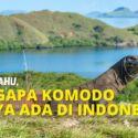 Wajib Tahu, Mengapa Komodo Hanya Ada Di Indonesia