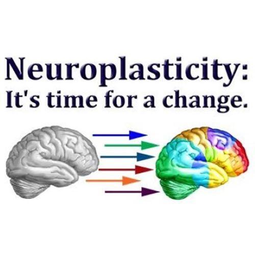 Neuroplasticity - Otak Manusia Bisa Memperbaiki Dirinya Sendiri