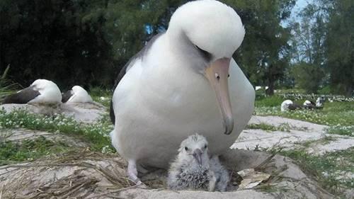 Burung ini hewan unggas jenis Albartos yang sudah hidup puluhan tahun di Bumi