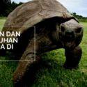 6 Hewan dan Tumbuhan Ini Hidup Ribuan Tahun!