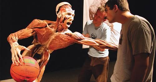 organ manusia sistem otot yang dipamerkan di pameran body world