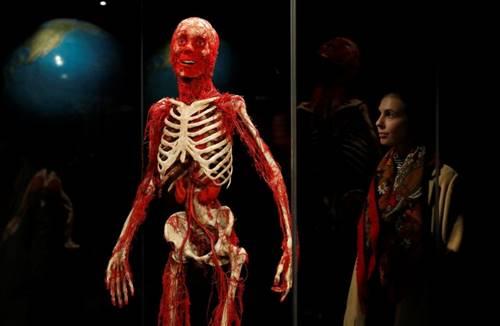 gambaran organ manusia pembuluh darah manusia dari mayat manusia asli