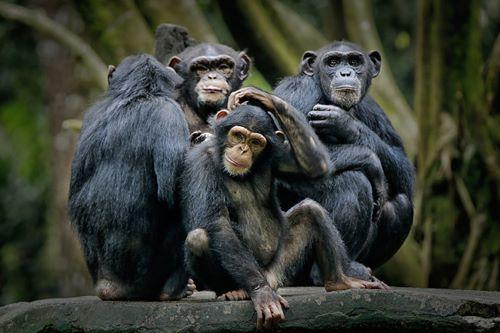 Primata, Hewan Yang Dapat Menguasai Bumi