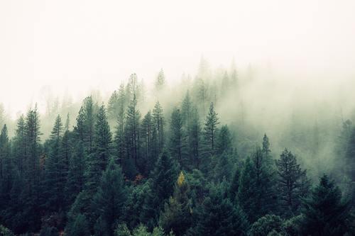 Hutan, Suku Lokal Bermata Biru