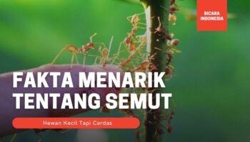 8 Fakta Menarik Semut, Hewan Kecil yang Cerdas